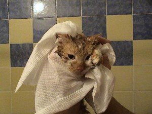 Чем нас будут мыть?
