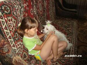 Обучение собаки трюку