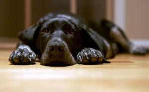 Самая грустная собака