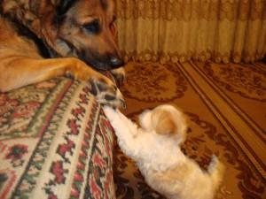 Уход за щенком