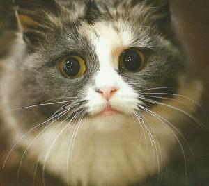 Усы у кошки