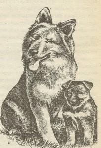 Волкообразная собака