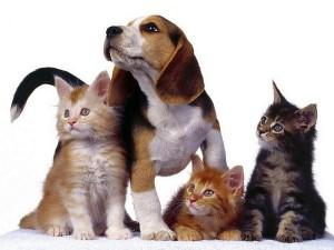 Котенок или щенок?