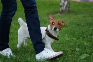 Команды для собаки