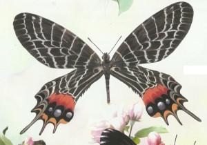 Самые красивые бабочки