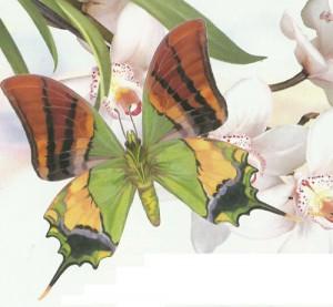 Самы красивые бабочки