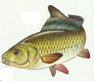 Пресноводная рыба