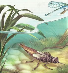 Обитатели пресных водоемов