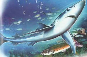 Акулы-людоеды