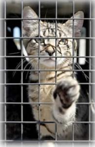 Кошка- охотник