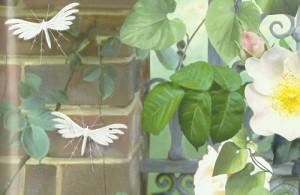 Самые необычные бабочки
