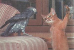 Попугай -задира