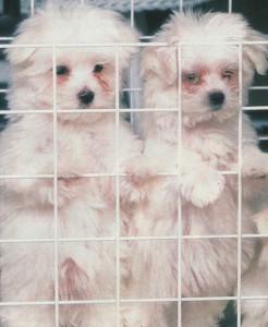 Брошенные собаки