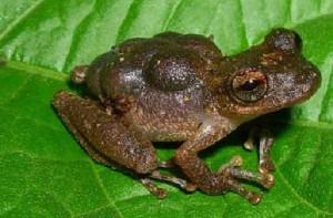Рождение лягушки