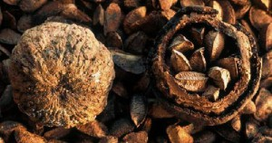 Твердые орешки бертолетии