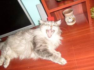 Кошки против