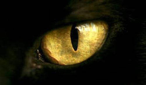 фото кошачьи глаза