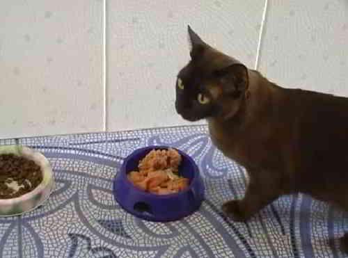Питание кошек