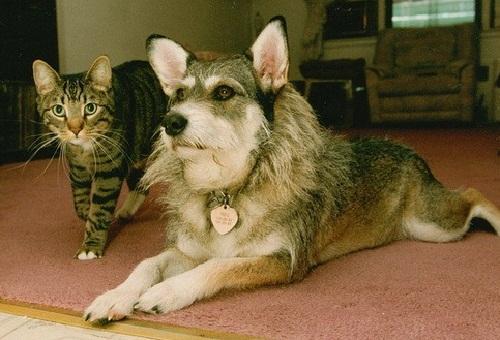 """Джинни, получившая награду """"Кошка года"""""""