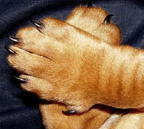 Передние пальчики