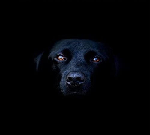 Собаки в темноте видят лучше человека