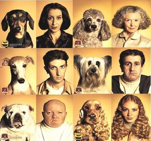 Собаки похожи на хозяев или наоборот?