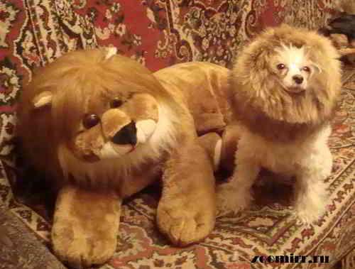 Грива льва своими руками