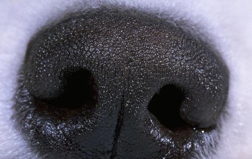 Уникальный нос