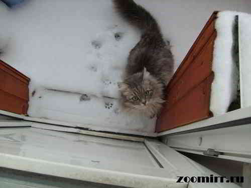 На что способна кошка