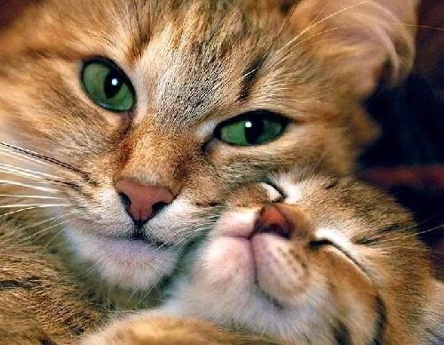 У вас будут котята