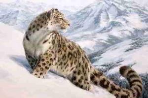 """Предпросмотр схемы вышивки  """"барс """". барс, картина, живопись, красота, животные, барс, снег, горы, предпросмотр."""