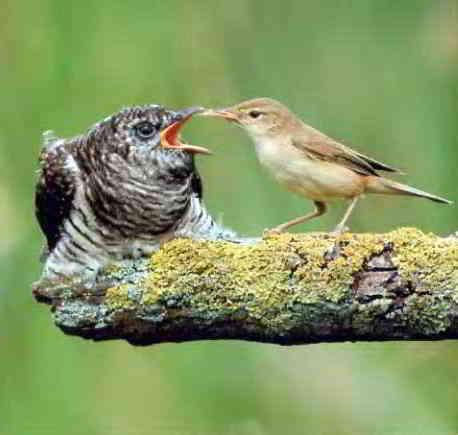 Приемная мать кормит дитя-переростка