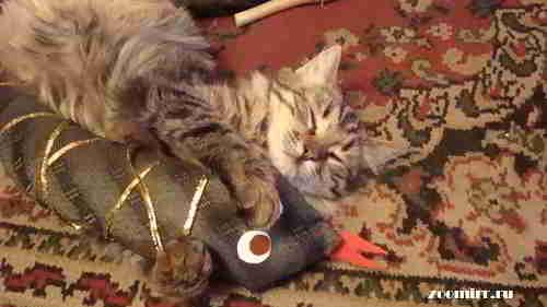 Котенок Нафаня и наша змея