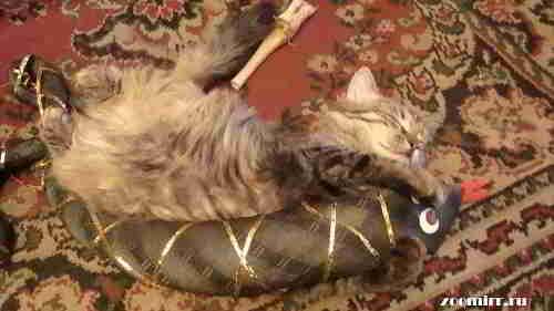 Котенок Нафаня в обнимку со змейкой