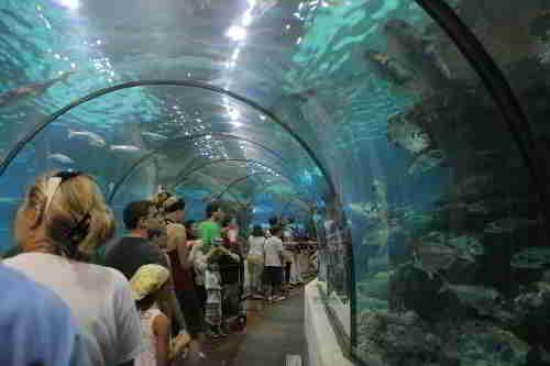 Тоннель Аквариума