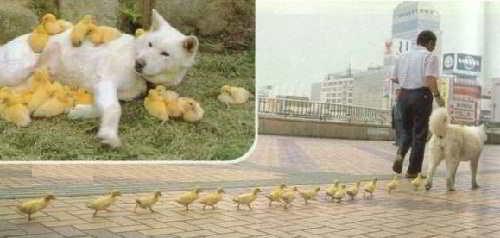 Куча- мала