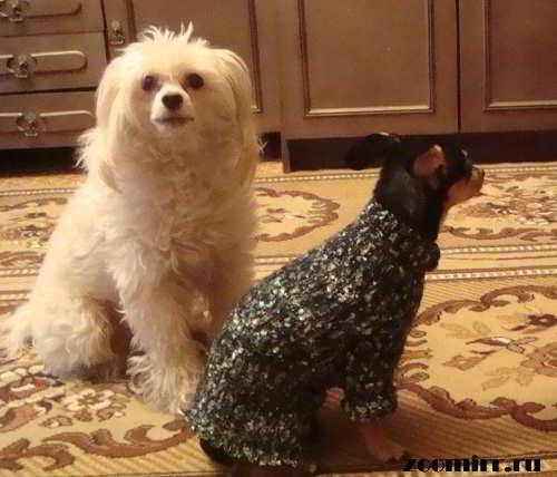 Собаки издают свои звуки