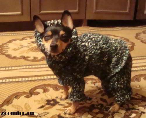 Одежда для собаки своими руками