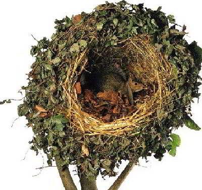 Беличье гнездо