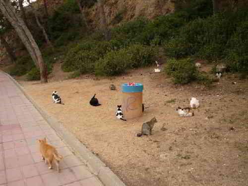 Кошачья набережная