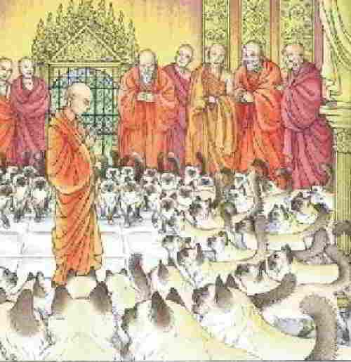 Священные кошки в монастыре
