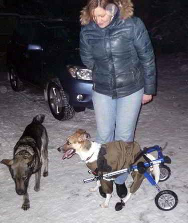 Дружелюбный пес Добрик
