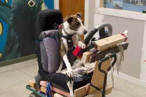 Тренажер,на котором обучали собак