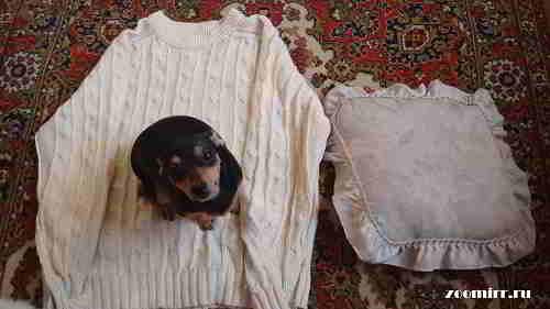 Берем старый свитер и небольшую подушку