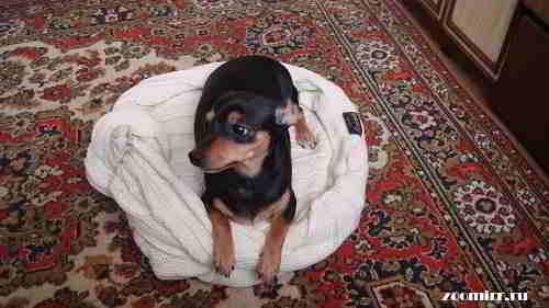Кроватка для собаки