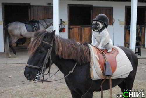 Фото забавных животных