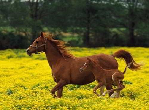 У лошади костей больше,чем у человека