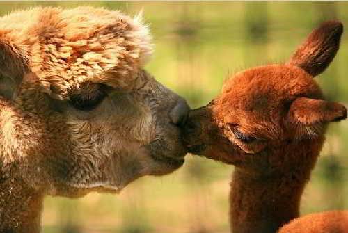 Факты из жизни животных