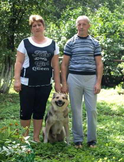 История про собаку