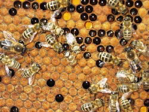 Мир пчел